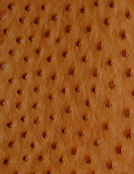Sample of the grain on the ostrich leather